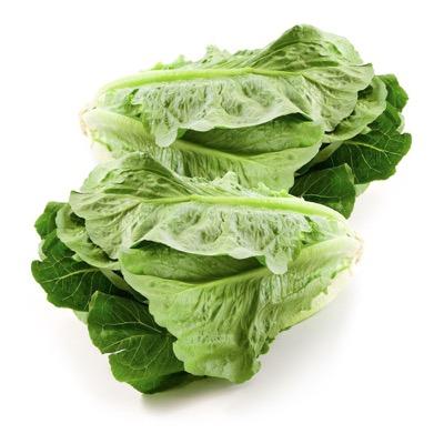 Lettuce Cos