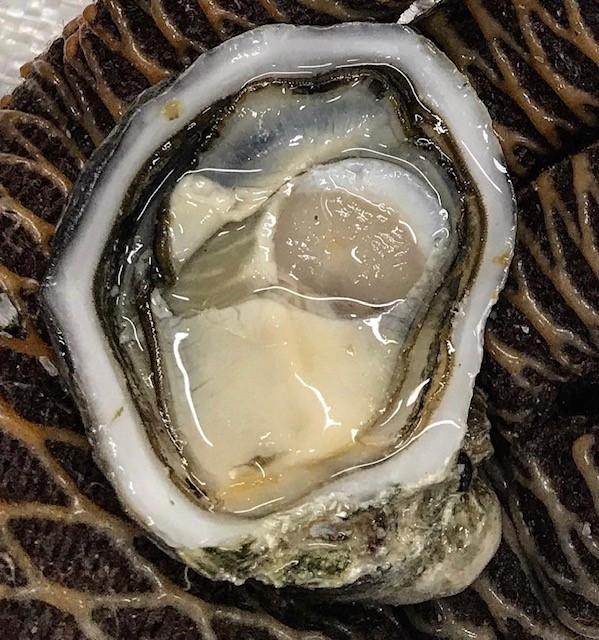 gazander Pacifc oyster Coffin Bay